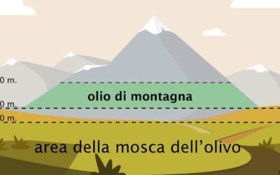 Dagli ulivi in alta quota nasce l'olio di montagna